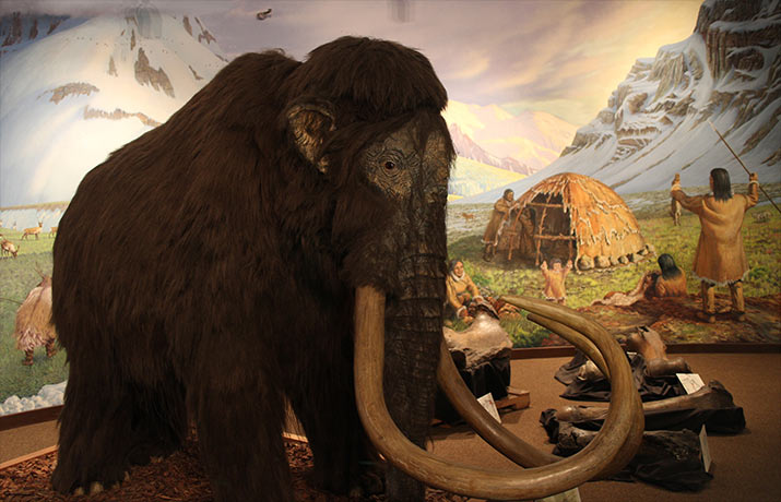 columbian-mammoth