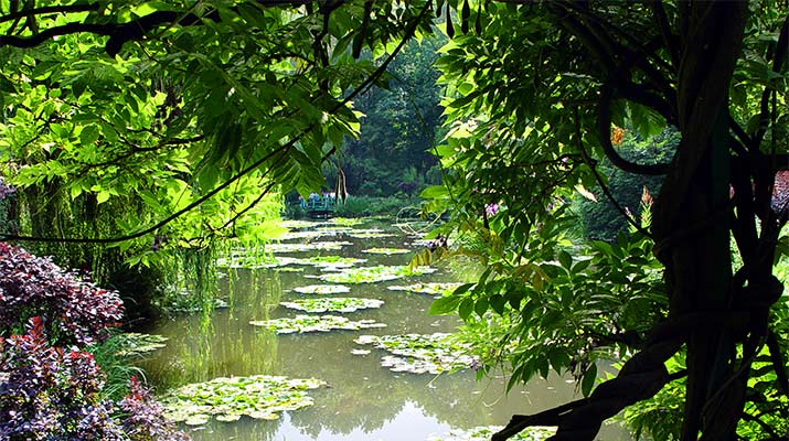 water-garden-giverny-715