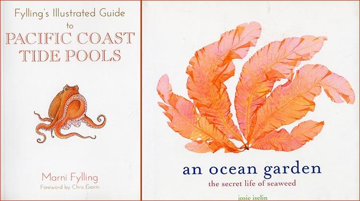 pacific-coast-tide-pools-ocean-garden-715