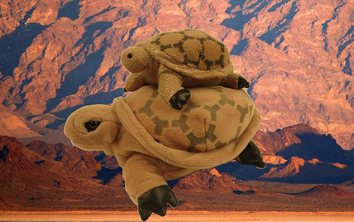 desert-tortoises-stuffed-animals-mojave-715