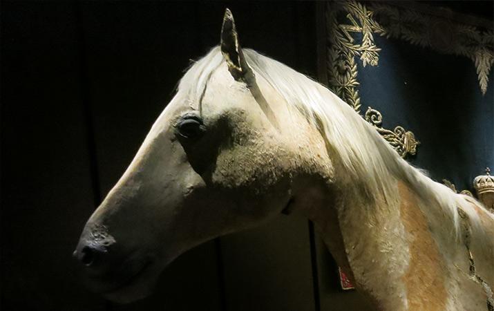 paris-army-museum-musee-armee-napoleon-horse-vizir-715