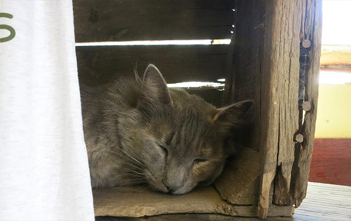 sonoma-county-farm-sleeping-cat-715