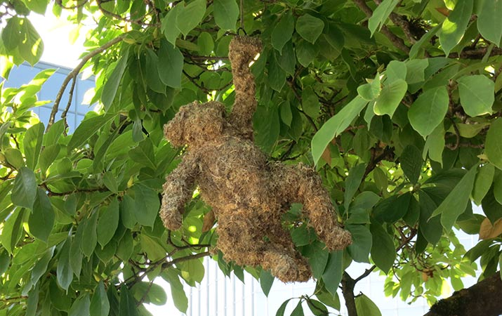 lan-su-chinese-garden-portland-monkey-in-tree-715
