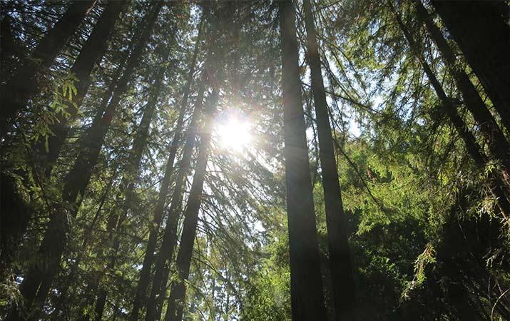 jack-london-state-park-sonoma-redwood-trail-715