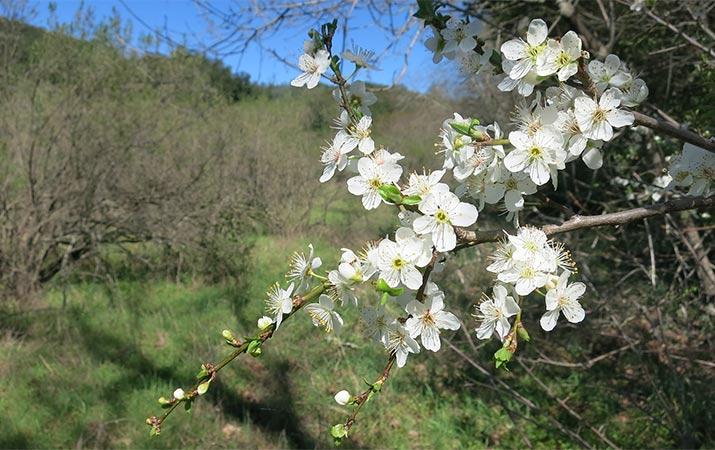 sugarloaf-ridge-state-park-spring-715jpg