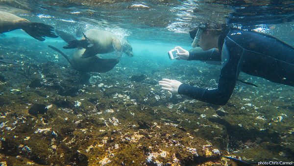 travelforkids_snorkeling_with_sea_lions-M