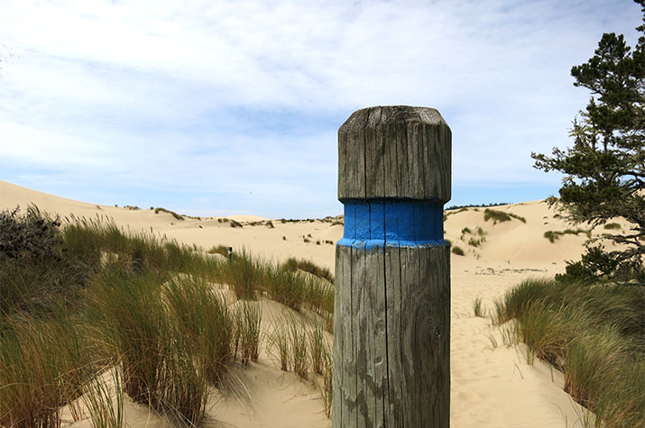 oregon-dunes-recreation-area-john-dellenback-trail