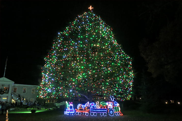 monterey-outdoor-christmas-tree-715