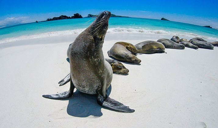 classic-journeys-galapagos-715