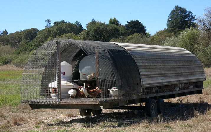 sonoma-county-mobile-chicken-coop-green-star-farm-715