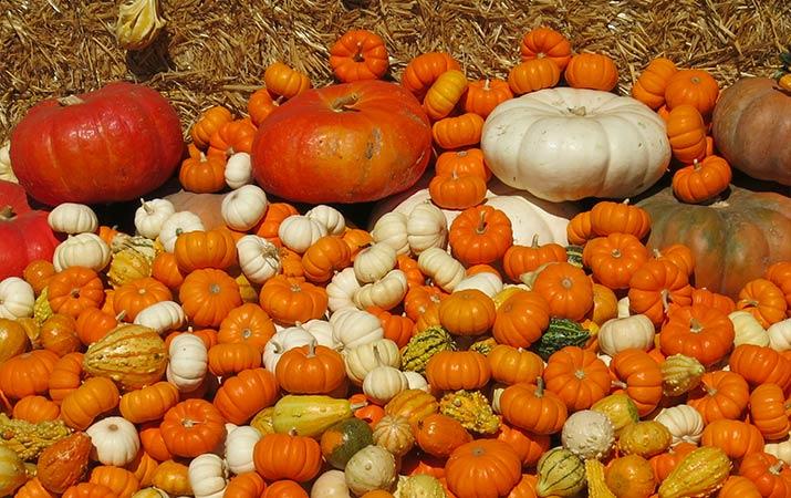 sonoma-county-pumpkins-715