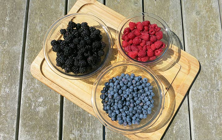 u-pick-raspberries-blueberries-blackberries
