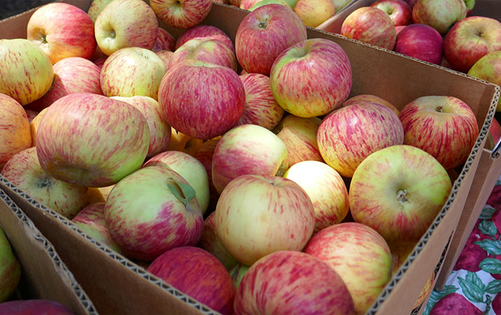 travelforkids-gravenstein-apple-fair-sebastopol-box-of-apples-715