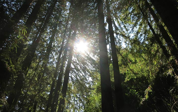 jack-london-state-historic-park-redwoods-715