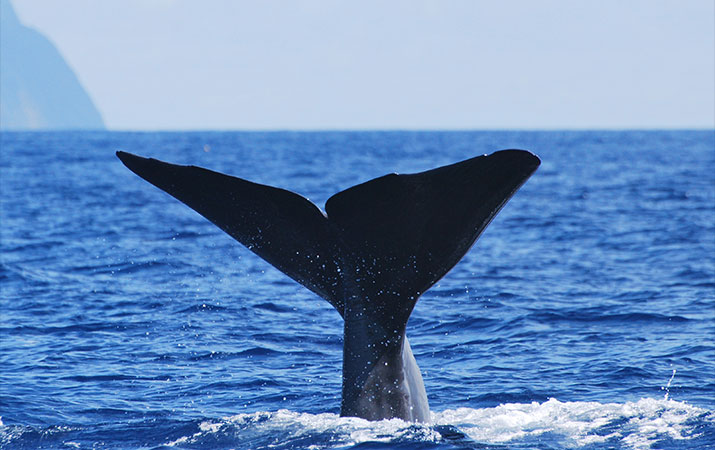 thomson-azores-family-tour-whale-watching-715